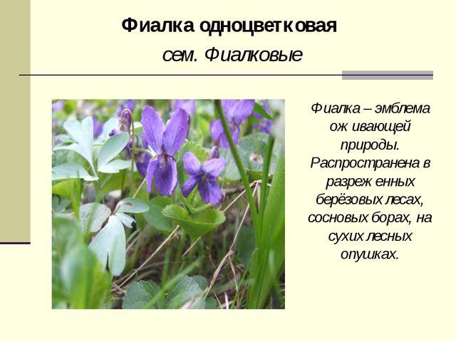Фиалка одноцветковая сем. Фиалковые Фиалка – эмблема оживающей природы. Распр...