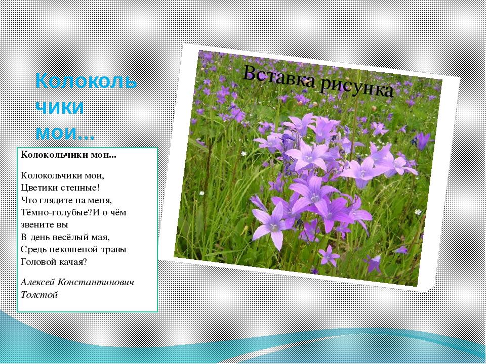 Сеять цветы на рассаду 241