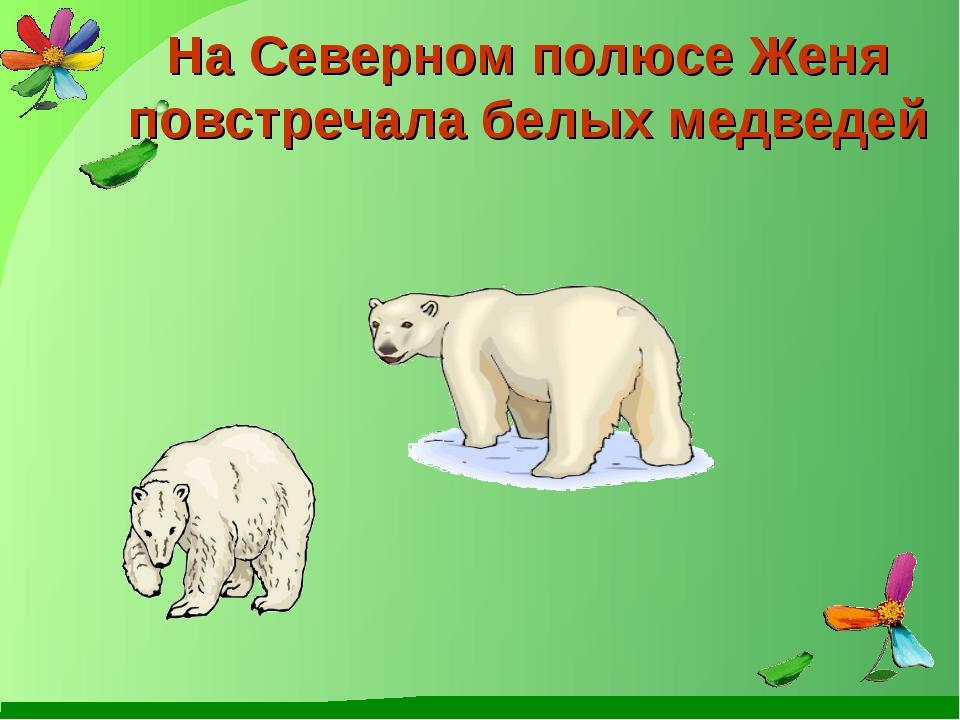 На Северном полюсе Женя повстречала белых медведей