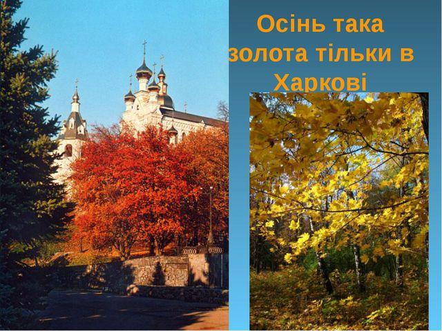 Осінь така золота тільки в Харкові