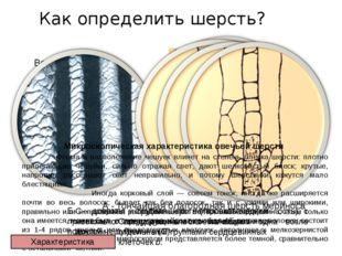 Как определить шерсть? Волокна шерсти под микроскопом Микроскопическая характ