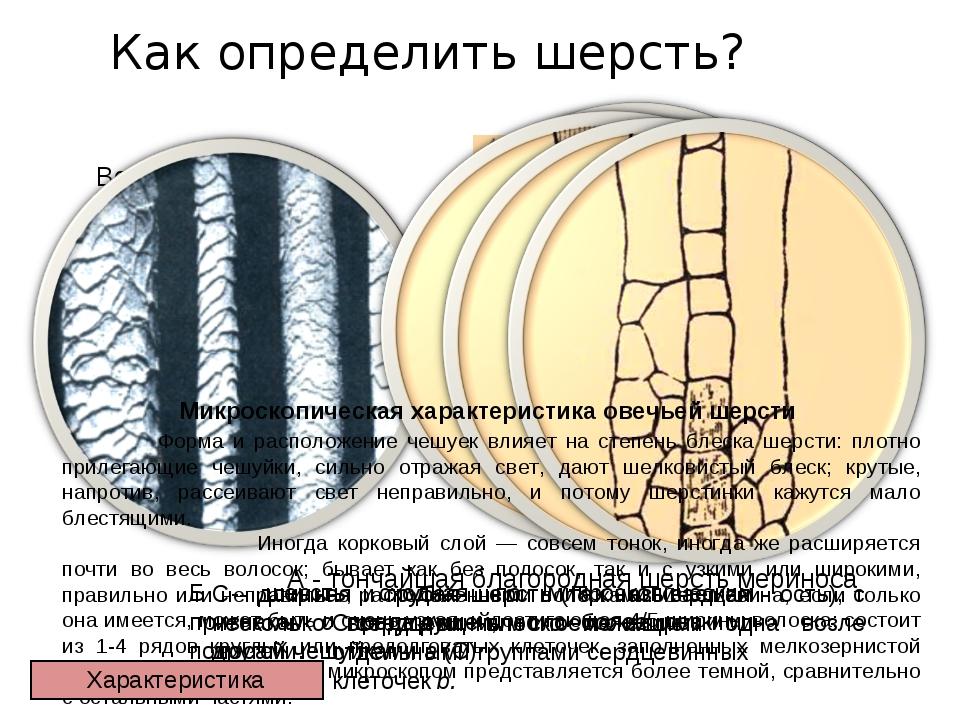 Как определить шерсть? Волокна шерсти под микроскопом Микроскопическая характ...