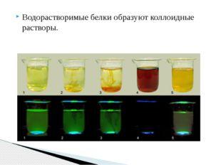 Водорастворимые белки образуют коллоидные растворы.