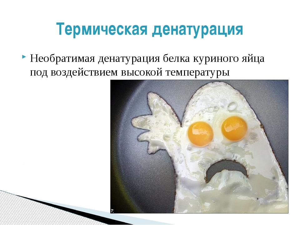 Необратимая денатурация белка куриного яйца под воздействием высокой температ...