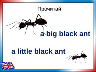Прочитай a big black ant a little black ant