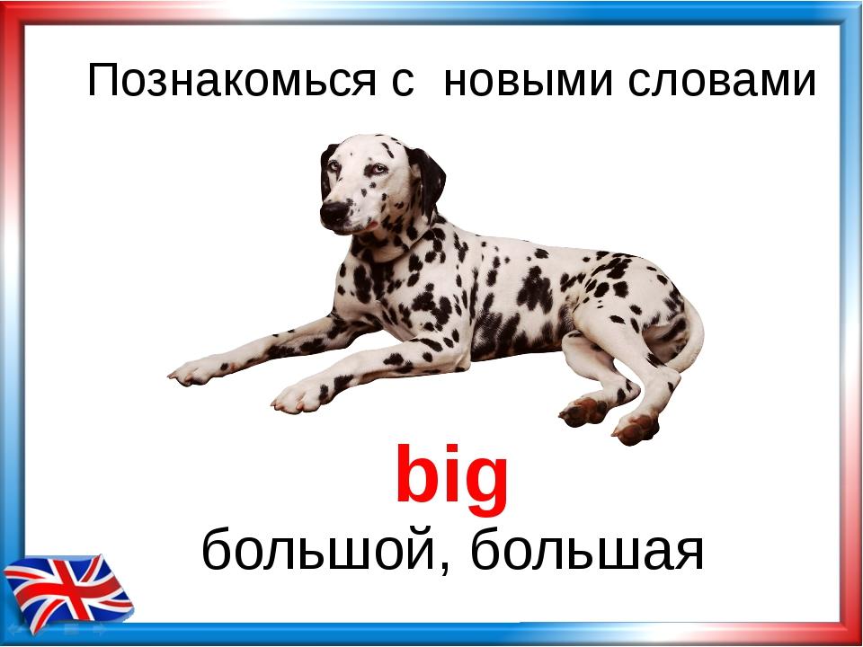 Познакомься с новыми словами big большой, большая