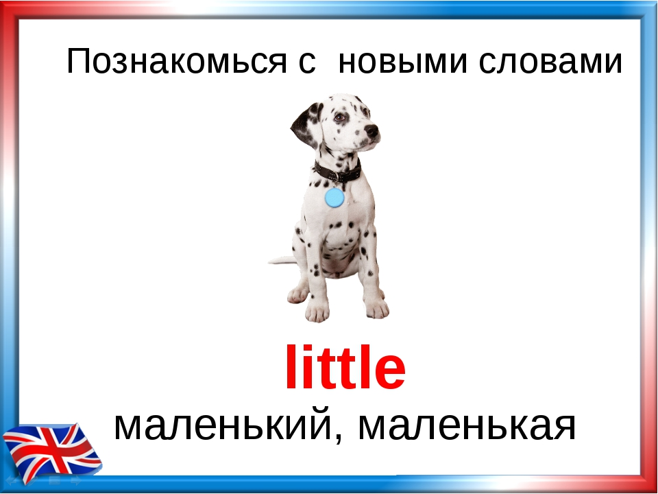 Познакомься с новыми словами little маленький, маленькая