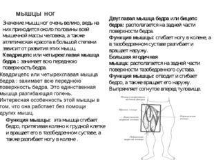 МЫШЦЫ НОГ Значение мышц ног очень велико, ведь на них приходится около полов