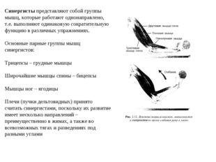 Синергисты представляют собой группы мышц, которые работают однонаправлено, т