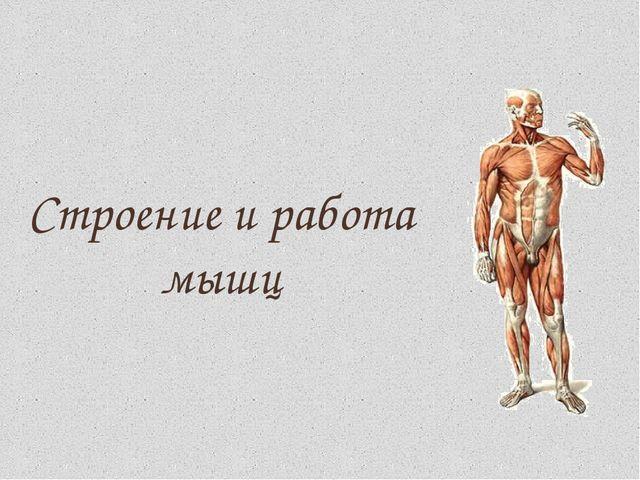 Презентация на тему анатомии мышцы — pic 11