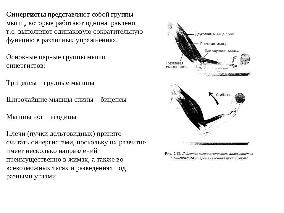 Синергисты представляют собой группы мышц, которые работают однонаправлено, т...