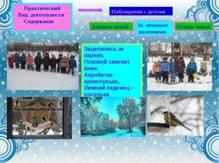 Наблюдения с детьми Деревья зимой Птицы зимой За зимними явлениями Практическ
