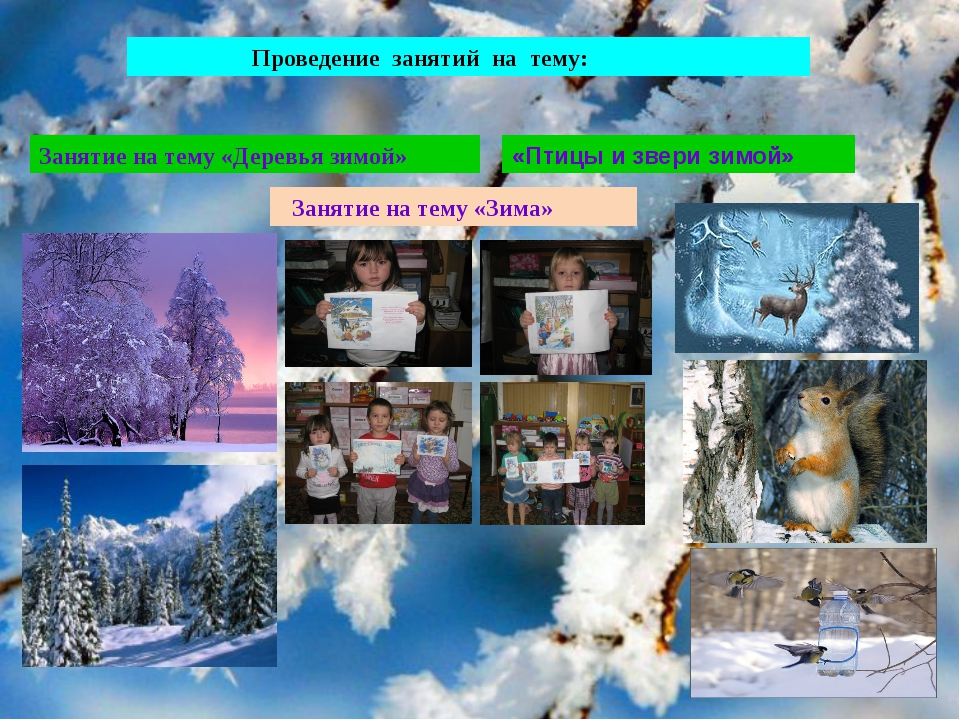 Проведение занятий на тему: Занятие на тему «Деревья зимой» «Птицы и звери з...