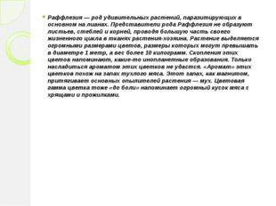 Раффлезия — род удивительных растений, паразитирующих в основном на лианах. П