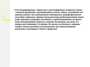 Род Аморфофаллус, также как и род Раффлезия славится своим «тонким ароматом»