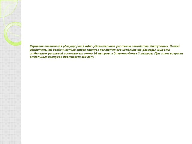 Карнегия гигантская (Сагуаро) ещё одно удивительное растение семейства Какту...