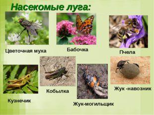 Насекомые луга: Жук -навозник Пчела Кобылка Жук-могильщик Кузнечик Цветочная