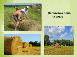 Заготовка сена на зиму