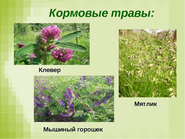 Кормовые травы: Мятлик Мышиный горошек Клевер