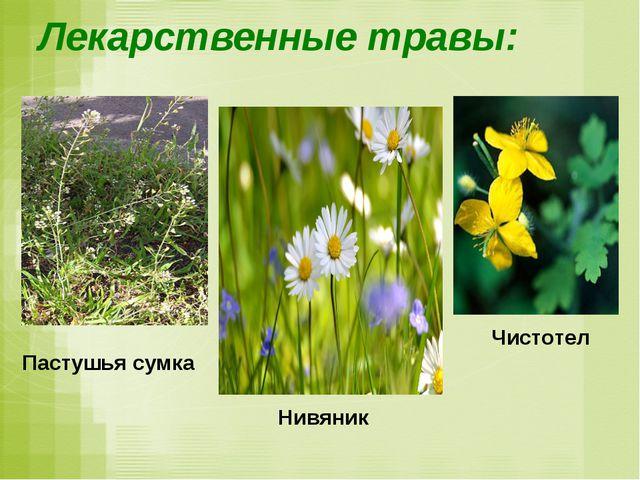 Лекарственные травы: Пастушья сумка Чистотел Нивяник