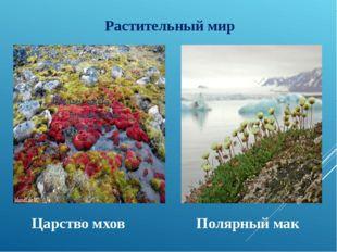 Растительный мир Царство мхов Полярный мак