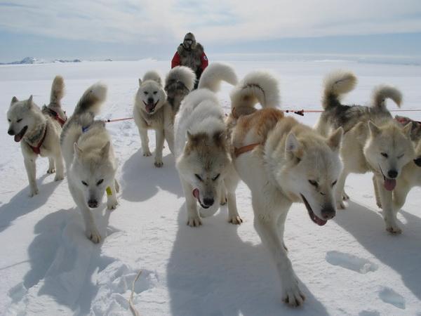 http://konyukhov.ru/assets/images/news/2014/Fedor_dogs1_600.jpg