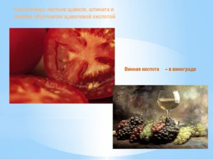 Кислый вкус листьев щавеля, шпината и томатов обусловлен щавелевой кислотой В