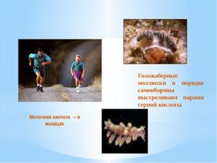 Голожаберные моллюски в порядке самообороны выстреливают парами серной кислот