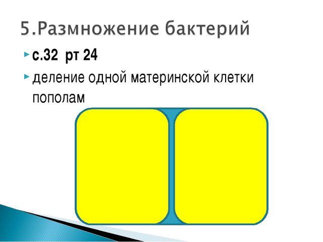 с.32 рт 24 деление одной материнской клетки пополам