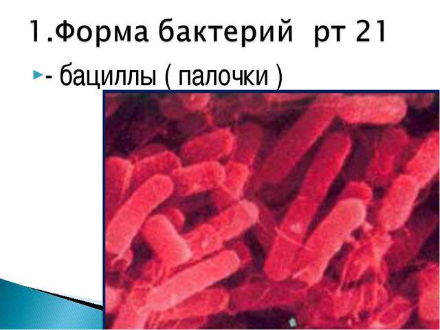 - бациллы ( палочки )