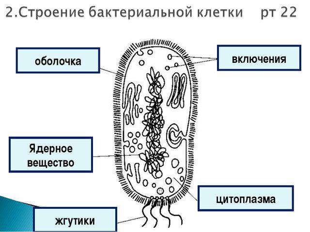 включения жгутики оболочка цитоплазма Ядерное вещество