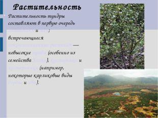 Растительность тундры составляют в первую очередь лишайники и мхи; встречающи