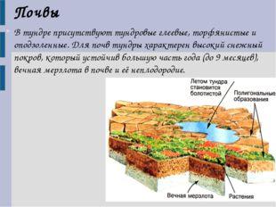 В тундре присутствуют тундровые глеевые, торфянистые и оподзоленные. Для почв
