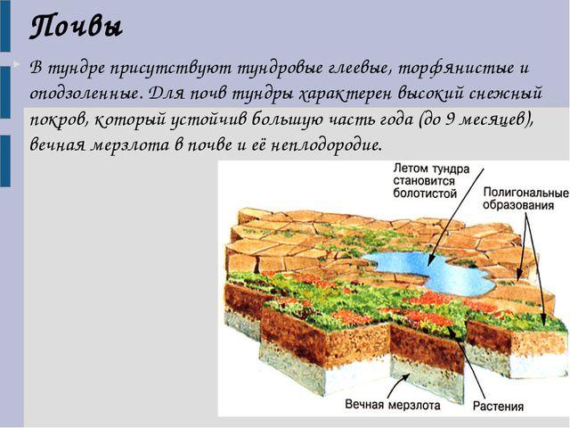 В тундре присутствуют тундровые глеевые, торфянистые и оподзоленные. Для почв...