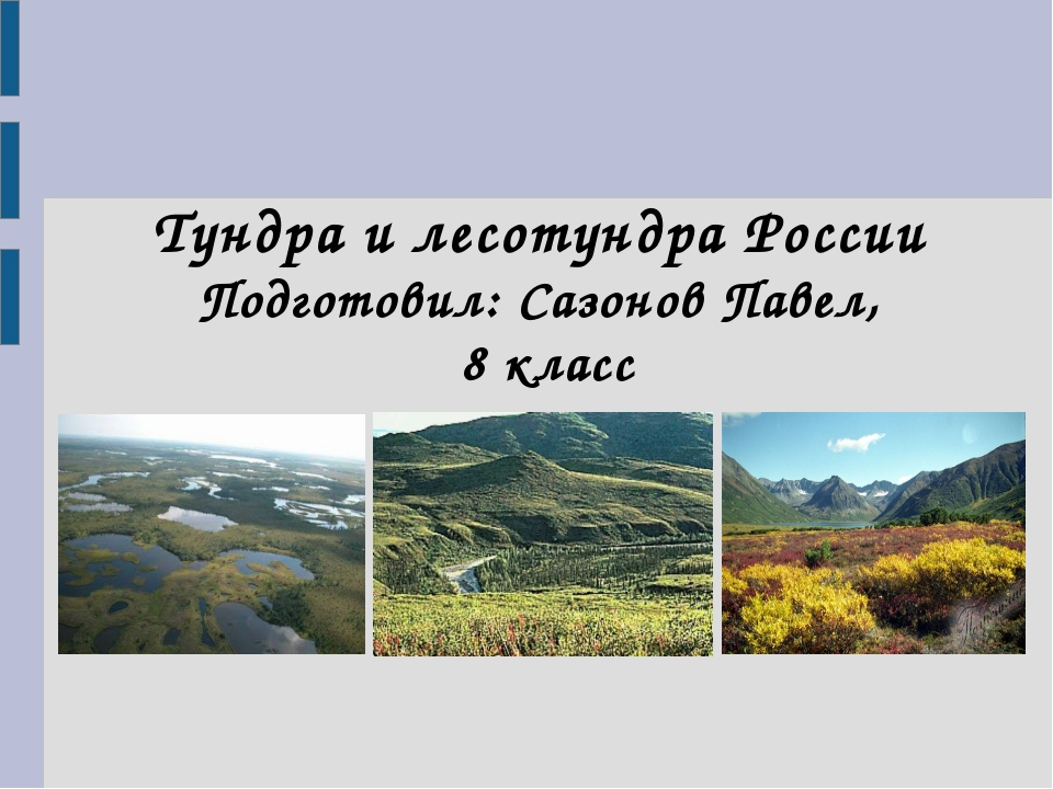 Тундра и лесотундра России Подготовил: Сазонов Павел, 8 класс