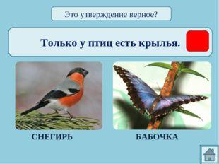 Только у птиц есть крылья. СНЕГИРЬ БАБОЧКА Это утверждение верное?