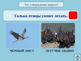 Только птицы умеют летать. ЧЁРНЫЙ АИСТ ЛЕТУЧИЕ МЫШИ Это утверждение верное?