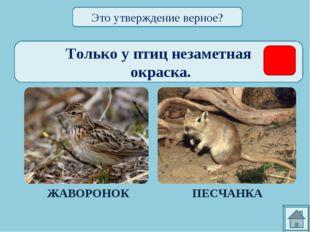 Только у птиц незаметная окраска. ЖАВОРОНОК ПЕСЧАНКА Это утверждение верное?