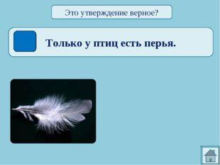Только у птиц есть перья. Это утверждение верное?