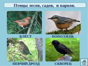 Птицы лесов, садов, и парков. КЛЁСТ ПОПОЛЗЕНЬ ПЕВЧИЙ ДРОЗД СКВОРЕЦ