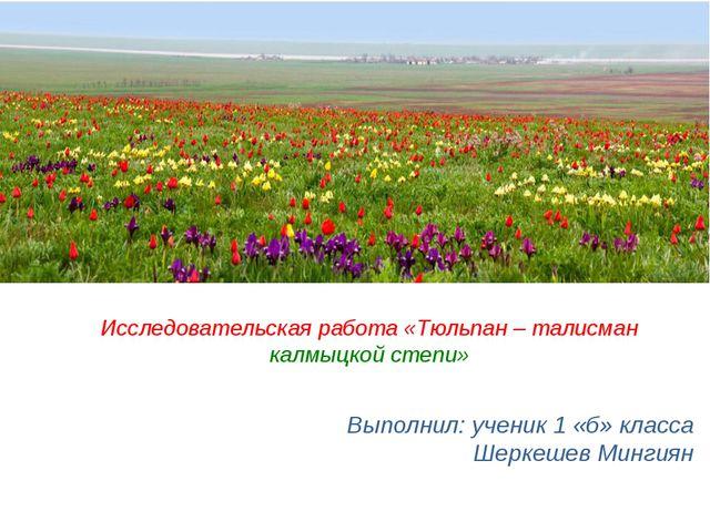 Выполнил: ученик 1 «б» класса Шеркешев Мингиян Исследовательская работа «Тюль...