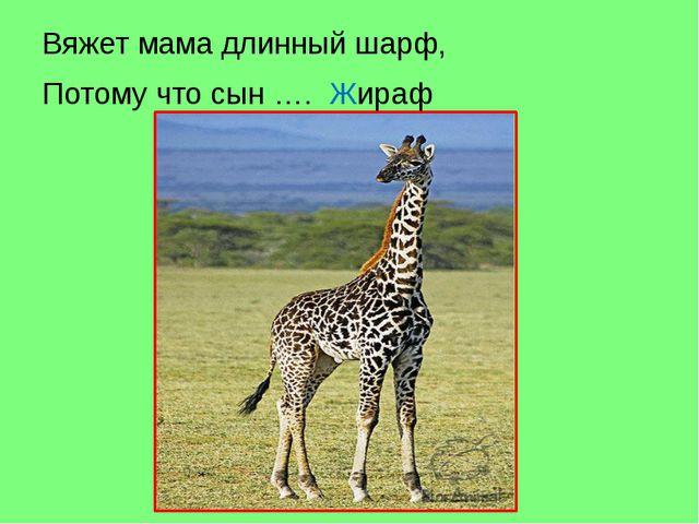 Вяжет мама длинный шарф, Потому что сын …. Жираф