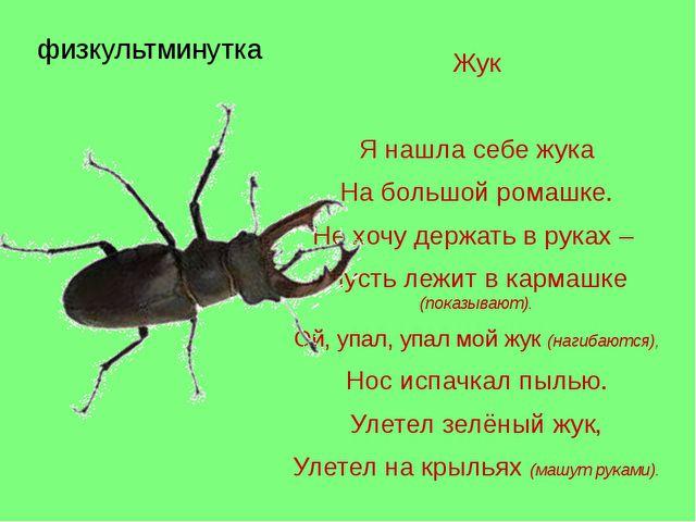 физкультминутка Жук Я нашла себе жука На большой ромашке. Не хочу держать в р...
