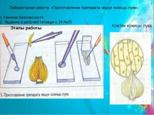 Клетки кожицы лука Лабораторная работа: «Приготовление препарата чешуи кожицы