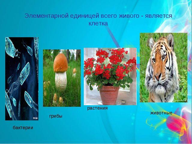 Элементарной единицей всего живого - является клетка бактерии растения животн...