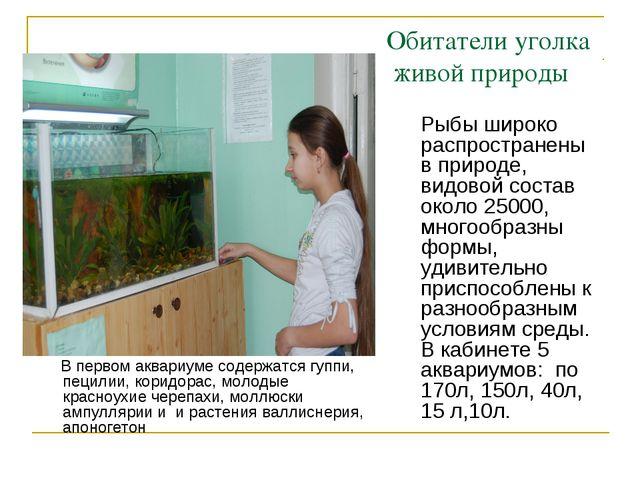 Обитатели уголка живой природы В первом аквариуме содержатся гуппи, пецилии,...
