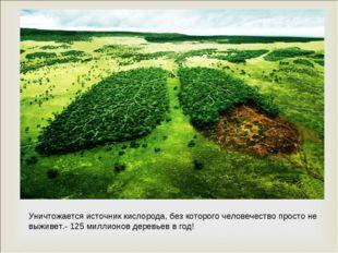 Уничтожается источник кислорода, без которого человечество просто не выживет.