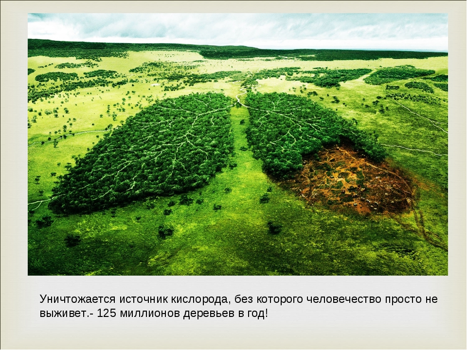 Уничтожается источник кислорода, без которого человечество просто не выживет....