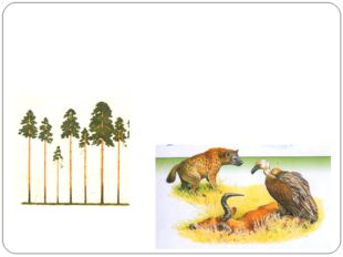 Конкуренция(- -). Примеры взаимоотношений: растения конкурируют между собой з