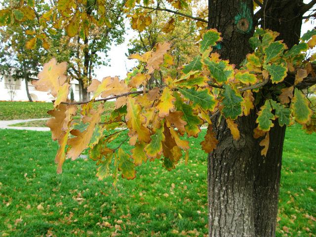 http://ia108.mycdn.me/getImage?photoId=527970802760&photoType=0
